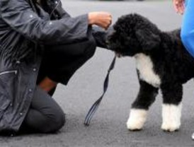 Multas de 300 euros por no llevar el carnet de mascotas