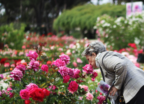 Los madrileños pueden elegir su rosa favorita