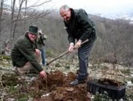 4.000 árboles repoblarán una dehesa de la Sierra del Rincón