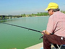 Más de 160 denuncias por actividad piscícola ilegal en Madrid en 2009