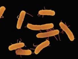 La Comunidad registró 54 brotes por infección alimentaria en 2008