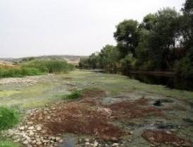 Denuncian que el Jarama se está secando