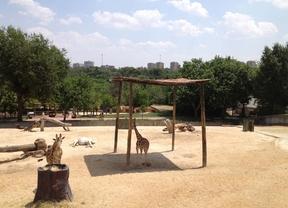 La sabana africana en el zoo de Madrid