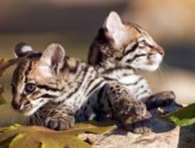 El Parque Europa de Torrejón estrenará zoo este fin de semana