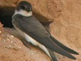 Agentes forestales contribuyen a salvar a una colonia de aves amenazadas