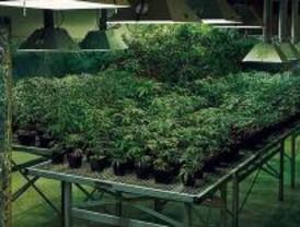 Detenido por tener más de 40 kilos de marihuana en su casa
