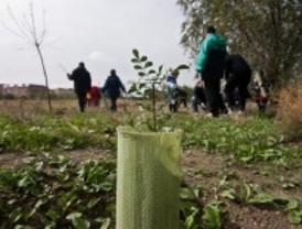 Vuelve la Fiesta del Árbol al Parque Lineal
