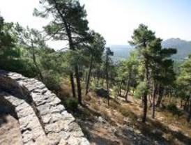440.000 árboles nuevos para el Monte Abantos