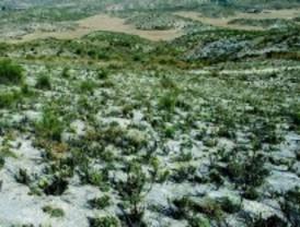 Plantas anuales gipsícolas amenazadas ante el cambio climático