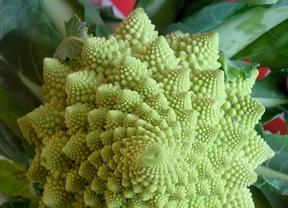 Conservan el brócoli intacto con una atmósfera especial