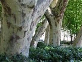 El árbol, protagonista en el Día Mundial Forestal