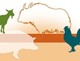 Diversidad genética de los animales domésticos