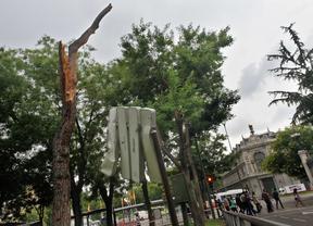 Árbol caído contra una señal de trafico