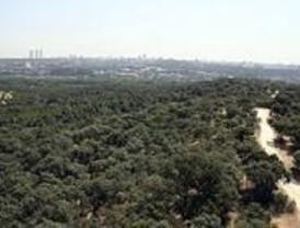 Los ecologistas creen que no se cumple el Plan de Repoblaciones