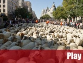 Cinco mil ovejas recuperan su cañada
