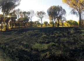 Recuperación de la zona quemada de la Dehesa en Las Rozas