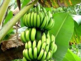 Los madrileños prefieren el zumo de plátano y los barceloneses el de fresa