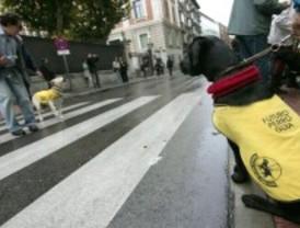Decenas de perros guía se pasean por Madrid para reivindicar los derechos de los invidentes