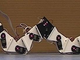 Robots que se mueven como animales invertebrados