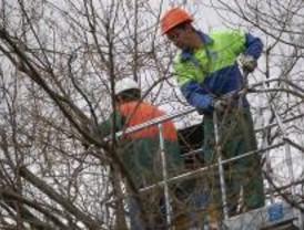 Cortes en doce distritos por la poda de árboles