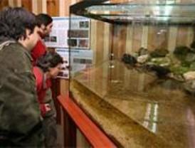 La Comunidad prepara un proyecto para el control de las visitas a Peñalara