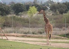 Safari Madrid cumple 40 años