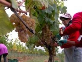 El calor y la falta de lluvias adelantan la vendimia en la Comunidad de Madrid