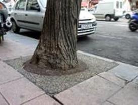 Más de mil personas reclaman en un mes mejoras en el arbolado a través del proyecto 'un alcorque, un árbol'
