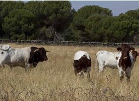 El Imidra firma un convenio para la conservación de las vacas Berrenda