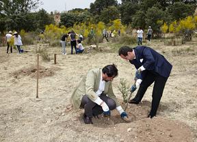 Las Rozas reforesta el área natural del Lazarejo