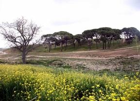El parque de Valdebebas abrirá en la primavera de 2015