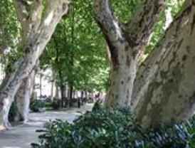 Leganés concluye el inventario de árboles en Zarzaquemada