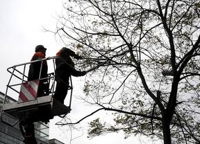 Sanjuanbenito asegura que este año ha habido más podas de árboles