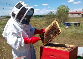 El declive de las abejas hace saltar las alarmas