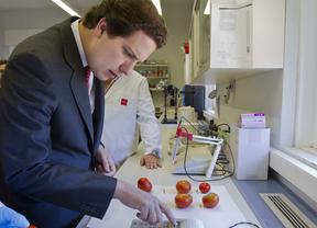El Imidra recupera la biodiversidad del tomate