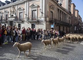 2.000 ovejas toman el centro