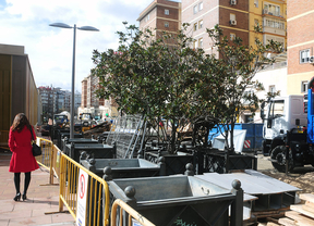 Las obras en Avenida de América acaban con casi todos los magnolios de la zona