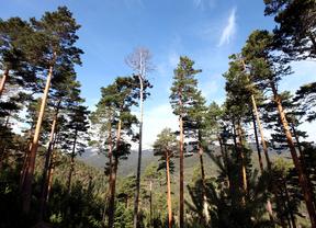 La Sierra de Guadarrama ya es Parque Nacional