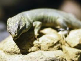 La biodiversidad echa raíces en el Museo Nacional de Ciencias Naturales