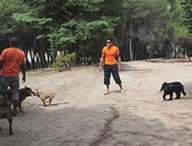 Canguros de mascotas