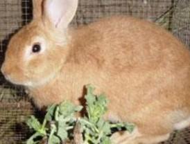 Encuentran un perro y dos conejos casi asfixiados en un contenedor