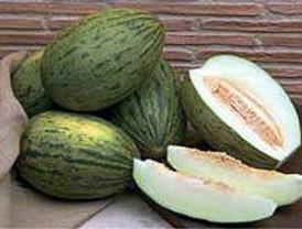 Un estudio certifica la calidad del melón de Villaconejos