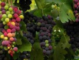 La feria Fruit Atracction acercará al sector hortofrutícola