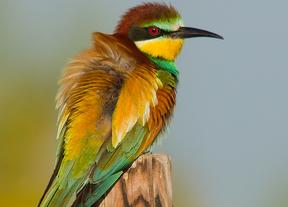 El día mundial de las aves se celebra este fin de semana