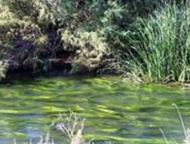 Ruta por las lagunas de Velilla de San Antonio