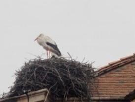 Recuperado un nido de cigüeña blanca en Fresnedillas de la Oliva