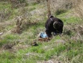 Ecologistas denuncian que el alcalde de Navas del Rey no les ha permitido plantar árboles