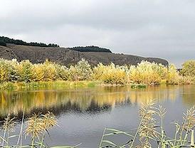 Un soto entre el Manzanares y el Jarama