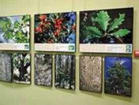 La exposición fotográfica 'Los Secretos de los Árboles' llega a Villaverde