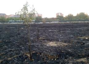 Arde la reforestación vecinal del Parque Lineal del Manzanares